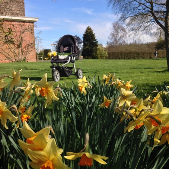 Daffodils and buggy