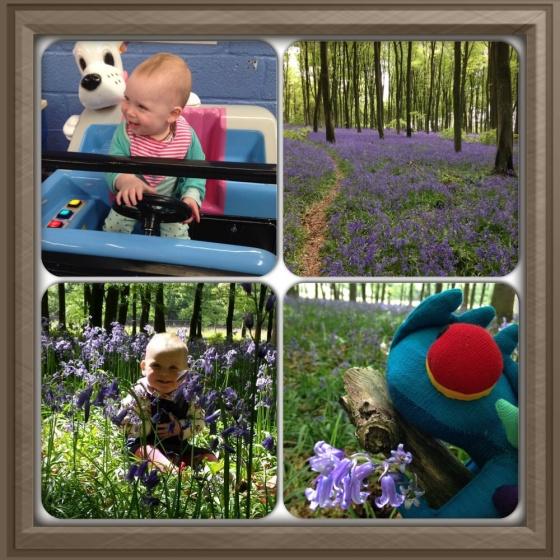 Exploring Bluebells
