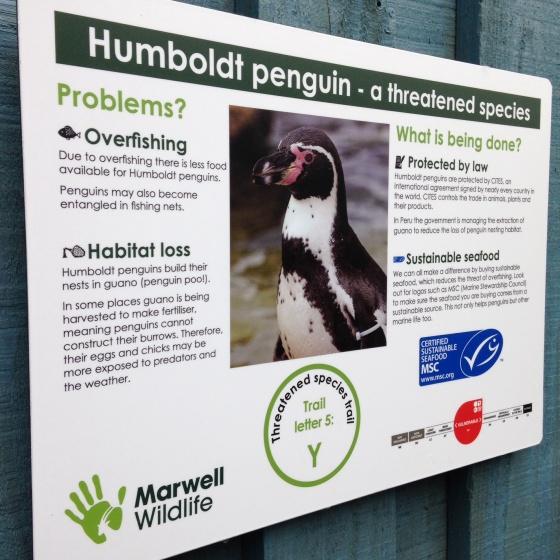 Humboldt Penguins info