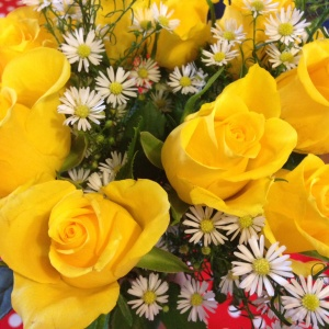 Appleyard Roses