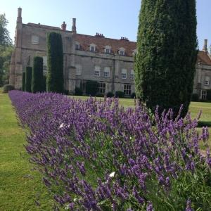 Mottisfont lavender
