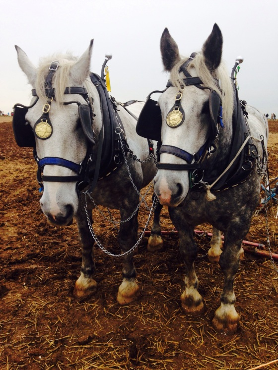The National Ploughing Championships