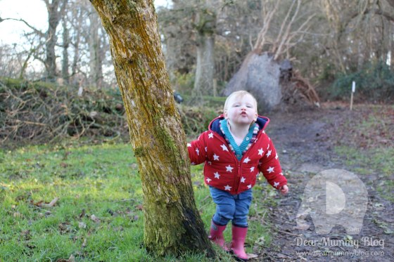 Kingston Lacy Woodland Walk