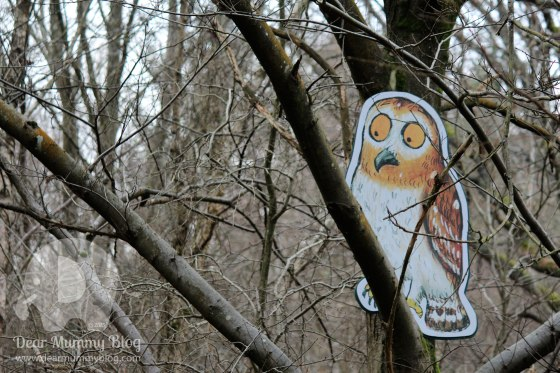 Owl in the trees at Alice Holt
