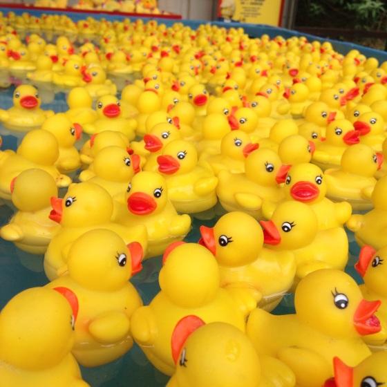 Nice weather for Ducks