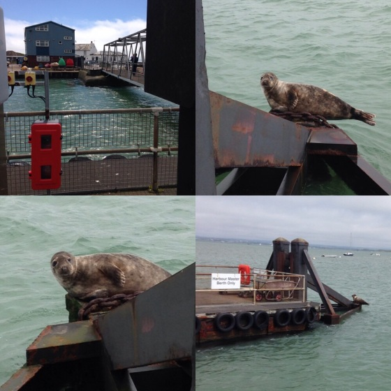 Hayling Island Seal