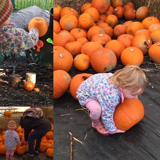 Pumpkin Carving at Manydown Farm