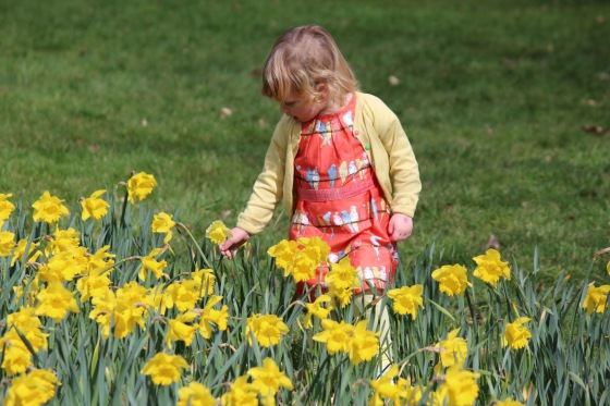 Bella in the daffodils