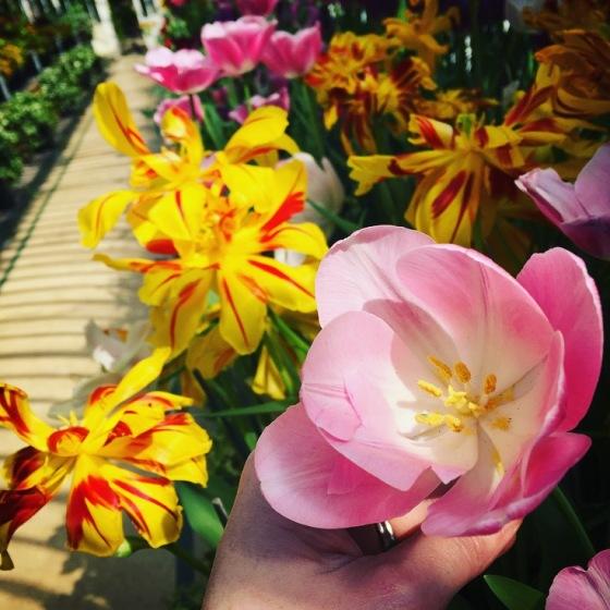 Belfast Botanic Garden