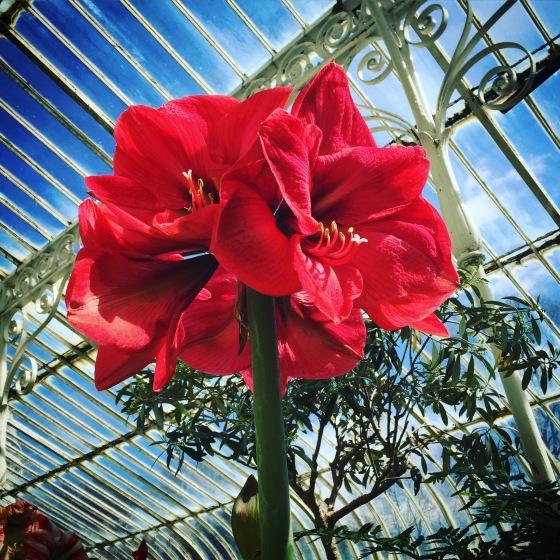 Belfast Botantic Gardens