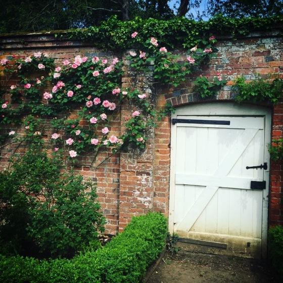 Roses at Mottisfont, National Trust