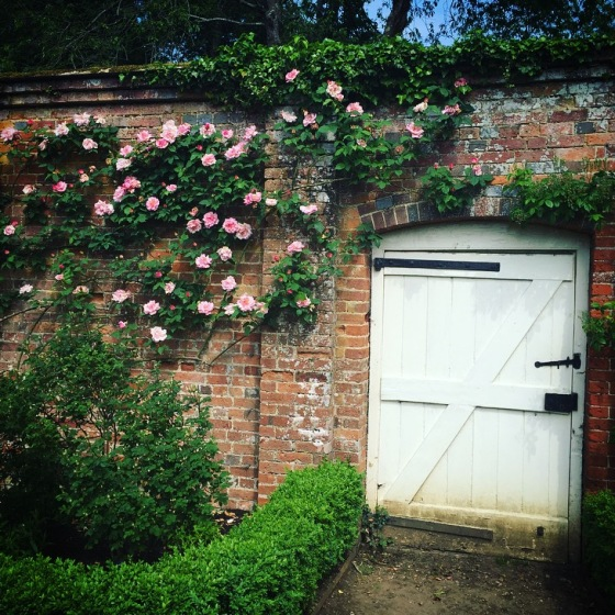 Roses at Mottisfont, National Trust