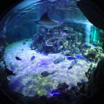 New Ideas Zone at Weymouth SeaLife centre