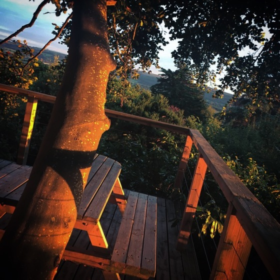 Uplands Treehouse Review
