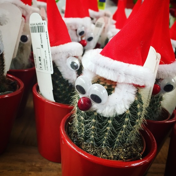 Haskins Garden Centre Christmas
