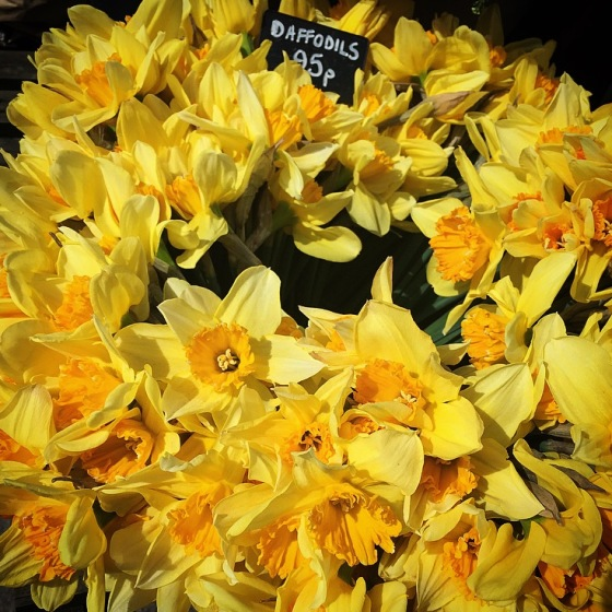Daffodil Halo