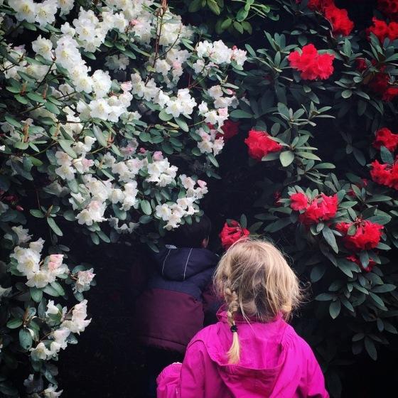 Exbury Gardens Review