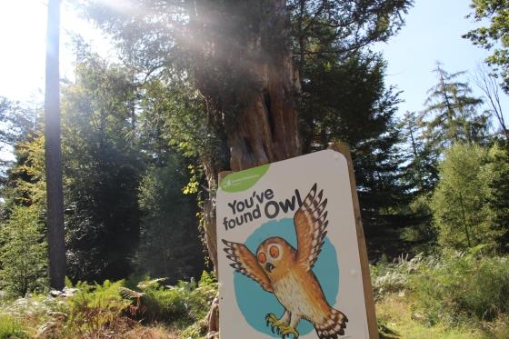 Gruffalo Trail at Bolderwood, New Forest
