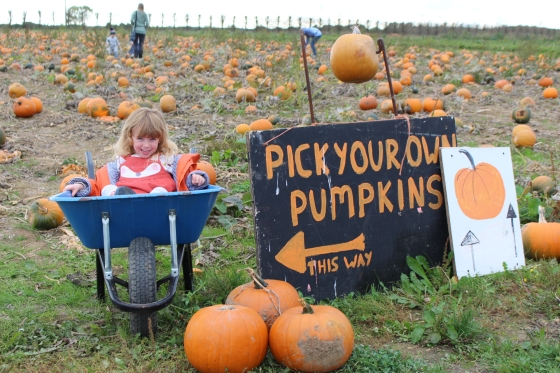 Halloween at Pickwell Farm