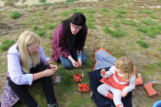 Strawberry Picking at Pickwell Farm