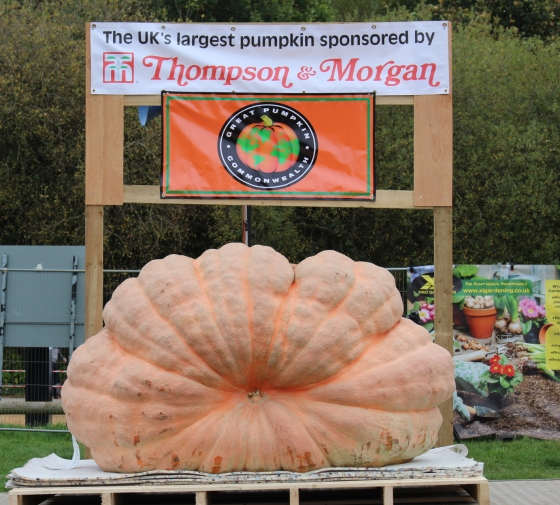The UK's Largest Pumpkin
