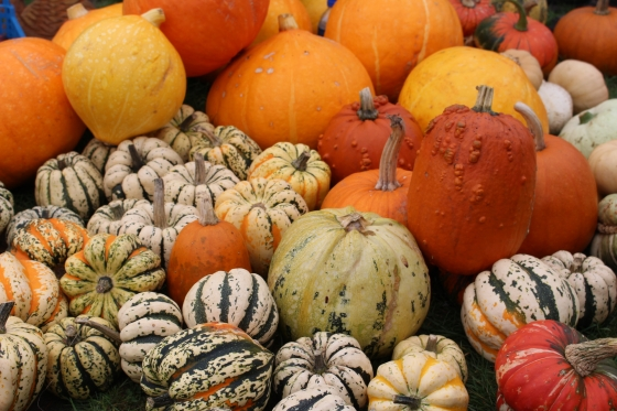The Autumn Pumpkin Festival at Royal Victoria Country Park