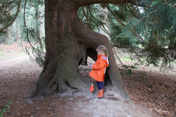 Blackwater Tall Trees Trail Review