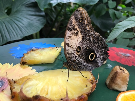 Beautiful Butterflies at RHS Wisley