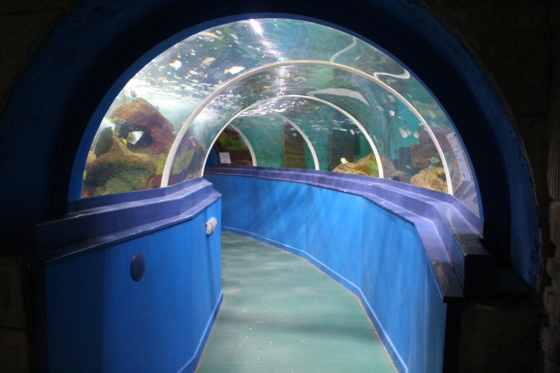 Into the Blue with Blue Reef Aquarium