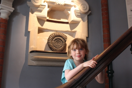 Lyme Regis Fossil Museum
