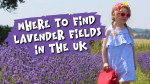 Lavender-Fields-UK-List